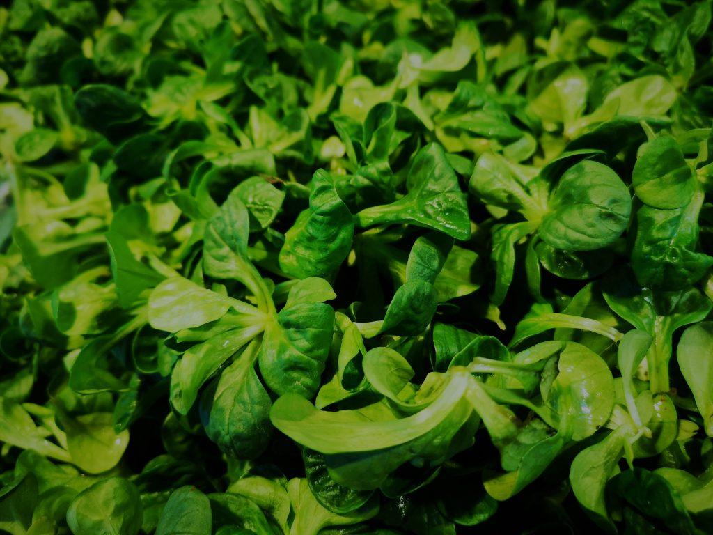Feldsalat frisch auf dem Markt gekauft