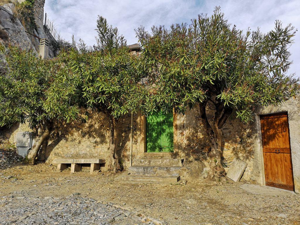 Auf dem Weg zur Burg in Finalborgo Bank mit zwei Olivenbäumen- Italien