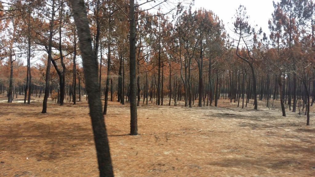 Verbrannte Wälder an der Küste Portugals