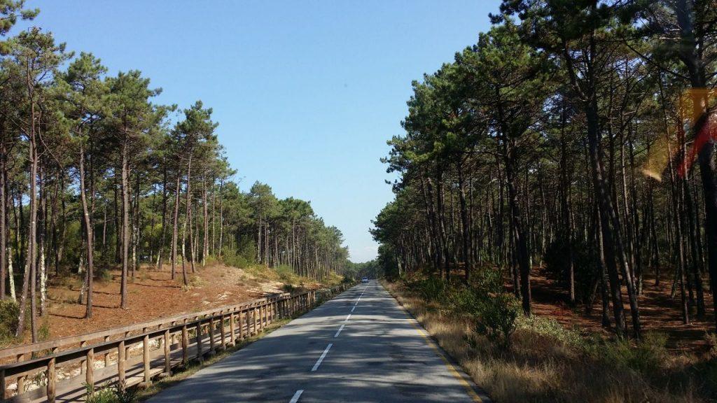 Küstenstraße durch Wälder in Portugal